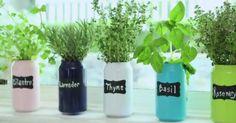 Cómo cultivar aromáticas en latas de refrescos