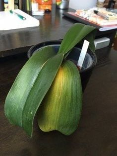 Orchid Care Discover Tips on Caring for a Sick Orchid A few of the most common questions I hear from readers are: My orchids leaves are wrinkled/turning yellow/drooping/falling off what does this mean? My orchid Indoor Orchids, Orchids Garden, Garden Plants, Indoor Plants, Potted Plants, Indoor Herbs, Air Plants, Cactus Plants, Orchid Plant Care