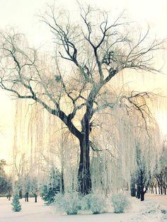 Winter Photography: A White Escape - Hongkiat.com
