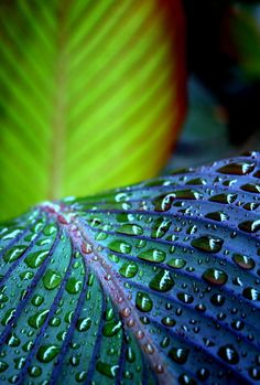 Navy Blue and Green in Nature - leaves with water drops Dew Drops, Rain Drops, Drip Drop, Fotografia Macro, In Natura, Morning Dew, Water Droplets, Shades Of Green, Blue Green
