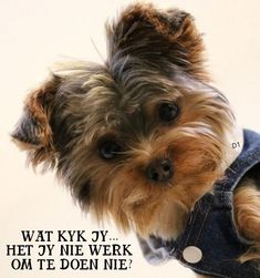Yorkie Puppy For Sale, Puppies For Sale, Humor, Funny, Dogs, Instagram Posts, Animals, Afrikaans, Wisdom Quotes