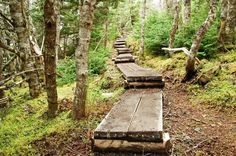 Hiking the Skerwink Trail near Trinity, Newfoundland - Hike Bike Travel Atlantic Canada, Newfoundland, Cool Places To Visit, East Coast, The Great Outdoors, Adventure Travel, Travel Destinations, Trail, Scenery