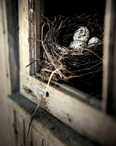 I have an old driftwood fence post with a nest inside--two eggs, one broken.  Need to photograph it...
