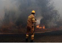 Δραματική κατάσταση: Ανεξέλεγκτη η πυρκαγιά στο Δήμο Σαρωνικού – Εκκενώνεται και η Ανάβυσσος Painting, Painting Art, Paintings, Painted Canvas, Drawings