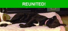 Great news! Happy to report that Mahlee has been reunited and is now home safe and sound! :)