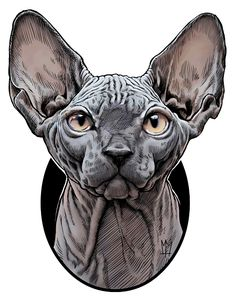 Illustration of the Sphynx cat breed.