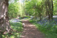 For nature trail. Sissinghurst Castle grounds.