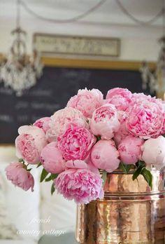 My Serenity - lovely peonies ᘡℓvᘠ❉ ღ Ϡ ₡ ღ✻↞❁✦ 彡 ● ⊱❊⊰✦❁ ڿڰۣ❁ ℓα-ℓ - Amazing Flowers, Fresh Flowers, Beautiful Flowers, Romantic Flowers, Exotic Flowers, Peony Flower, My Flower, Cactus Flower, Pink Peonies