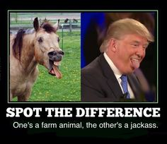 I apologize to all the legitimate jackass's of the world, you know the rest of the Republican Party!