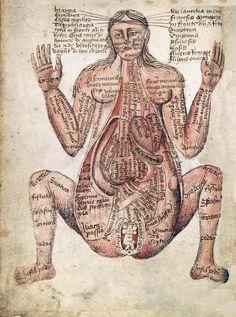 antique early greek anatomical print pregnant