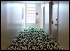 """White tulips in the child psychiatry unit of the now defunct Massachusetts Mental Health Center. From the installation, """"Bloom,"""" by Anna Schuleit."""