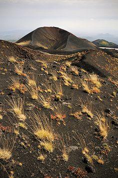 Wild grasses - Etna - Sicily