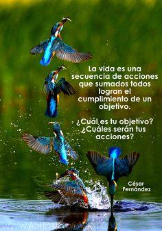 La vida es una secuencia de acciones...
