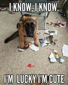 I SAY THIS TO MY GERMAN SHEPHERD EVERYDAY