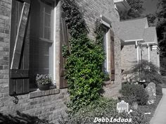 Custome wood shutters - traditional - exterior - charlotte - Debbiedoo's