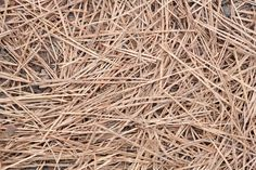 Mulching With Organic Materials Helps Add Nutrients, Keep Weeds At Bay And Warm The Soil. Is Pine Straw Good Mulch? Pine Straw Is Freely Available In Areas With Pine Trees And Is Inexpensive To Purchase In Bales. Snap Here To Learn More.