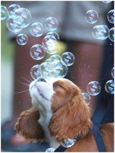 Aww! We just can't get enough of these dogs playing in bubbles!