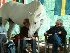 equine therapy - life changing experience with horses. Their intuition teaches us about ourselves