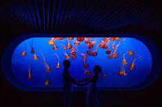Wedding Photo at Monterey Bay Aquarium 2