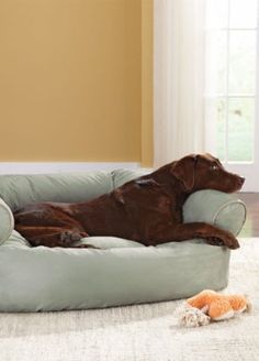 Double your pet's comfort! #sofa #dog #bed