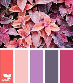 funnily this is quite similar to a pallette of fabrics that I bought the other weekend!