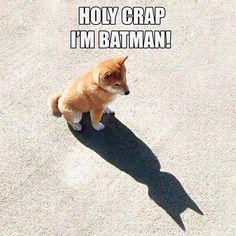 Holy crap, I'm Batman