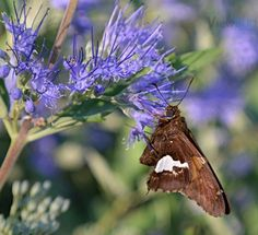 """Photo """"Purple & Butterfly"""" by teewhyell"""