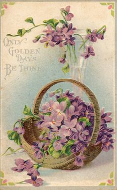 Vintage violet postcard