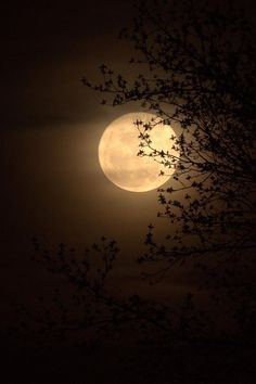 Moon Through The Trees.. beautiful... yet spooky! <3