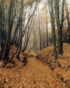 #autumn #ojcow #forest #golden #poland