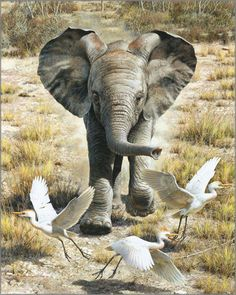 Carl Brenders - Flushing Egrets - Baby Elephant  2011