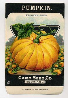 Vintage Seed Packet - Pumpkin - Card Seed Co.. $3.50, via Etsy.