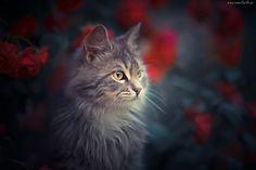 Kot, Szary - Tapeciarnia.pl