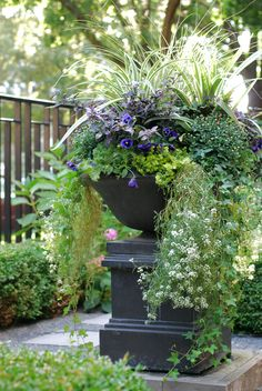Annual planters on pinterest annual flowers pansies and for Annual garden designs