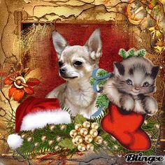 Merry Christmas Gif, Christmas Time Is Here, Christmas Greetings, Christmas Cards, Xmas, Advent, Love You Gif, Animation, Cute Dogs