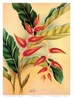Heliconia, Hawaiian Tropical Flower c.1940s Art Print