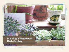 Planting a Windowsill Herb Garden