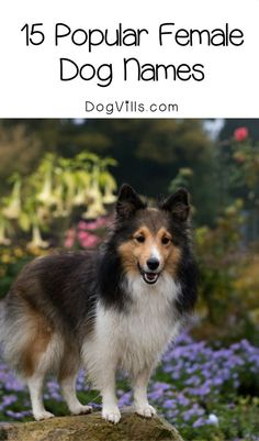 Can�t decide what to name that sweet new girl you just adopted? No worries! Check out 15 of the most popular female dog names for a bit of inspiration! Tiny Dog Breeds, Dog Breeds Little, Funny Dog Toys, Best Dog Toys, Funny Dogs, Popular Female Dog Names, Modern Dog Toys, Girl Dog Names, Dog Organization