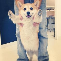 29 Corgis to get you through your day...And this.
