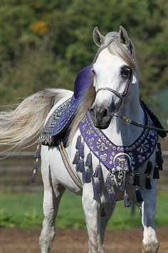 Arabian horse❤❤❤ I love how they style Arabian horses, my all time fav. Horse breed, especially the black stallions. Fell in love with Walter Farley's The Black Stallion as a child! Horses And Dogs, Animals And Pets, Cute Animals, Pretty Horses, Beautiful Horses, Campolina, Horse Riding Clothes, Horse Costumes, Horse Artwork