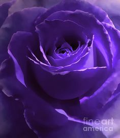 Artistically enhanced dark purple rose flower photography art for your home or office decor.Copyright by Jennie Marie Schell. Violet Aesthetic, Dark Purple Aesthetic, Aesthetic Roses, Lavender Aesthetic, Aesthetic Colors, Dark Purple Wallpaper, Purple Wallpaper Iphone, Purple Wall Art, Purple Walls