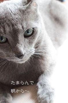 "my cat ""lakilaki"""