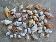 Countless varieties of shells just outside your door at Casa Ybel Resort.  www.iloveshelling.com for tips and tide schedules.