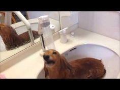 ¡Esta perrita sí que disfruta con el baño!