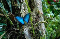 Butterfly, Ecuadorian Cloud Forest - Andean Drift