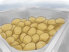 How to Plant Potatoes. Potatoes are a staple of several ethnic diets. The process of growing potatoes is simple.– Just move down to Step 1 to get started. Pick potatoes according to their growth period. Potatoes are classified according to . When To Plant Potatoes, Growing Sweet Potatoes, How To Store Potatoes, Planting Potatoes, Grow Potatoes, Container Gardening Vegetables, Vegetable Garden, Garden Plants, Gardening Zones