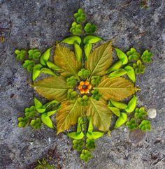 ☼ Seasons ☼ Summer ☼ Floral Mandala