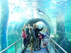 Melbourne Aquarium Visit Melbourne Australia's Culture Capital City