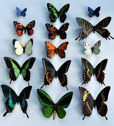 I will buy these. | Butterfly Moth Magnets Tropical Rainforest by DougWalpusArtStudio, $20.00