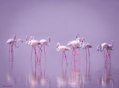 Photo Miss congeniality by Ahmed Thabet on 500px